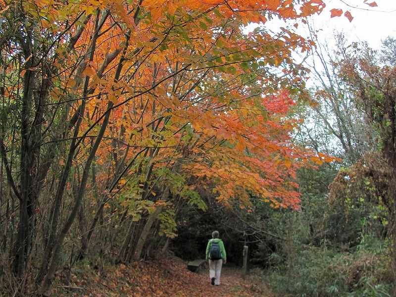 Image result for ryozenji in fall