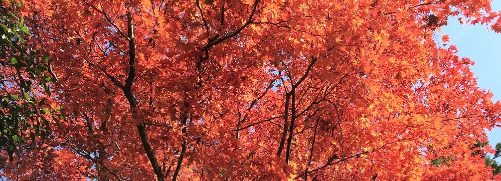Autumn at Kakurunji, Shikoku 88 Temple Pilgrimage, Japan