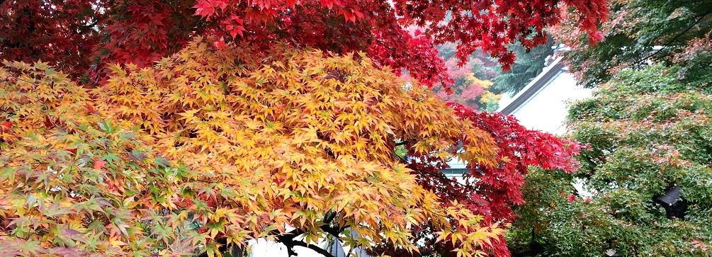 At Negoroji, Temple 82, Shikoku 88 Temple Pilgrimage, Japan